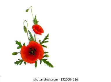 Flowers red poppy and buds ( Papaver rhoeas, common names: corn poppy, corn rose, field poppy, red weed ) on a white background with space for text. Top view, flat lay