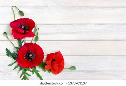 Flowers red poppy and buds ( Papaver rhoeas, corn poppy, corn rose, field poppy, red weed ) on white painted wooden planks with space for text. Top view, flat lay