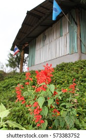 Flowers red and wooden building