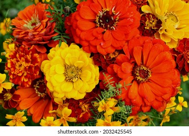 Flowers of red and yellow zeal in a bouquet. Decorative object from flowers. Makro photo.