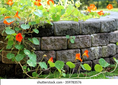 Flowers and retaining wall brick