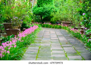 Flower's road. Flower summer of Vietnam