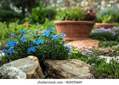 Attrayant Flowers In Rock Garden