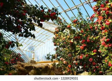 flowers roses in maslak kasri greenhouse istanbul turkey