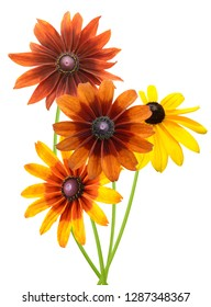 Flowers (rudbeckia) branches isolated on white