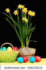 Flowers in sackcloth pot on yellow wood table by Easter eggs. Narcissus and Easter decor on black background. Eggs in red, blue, green and yellow colors placed in green basket near narcissi flowers