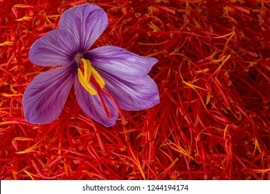 "Flowers of saffron after collection. Crocus sativus, commonly known as the ""saffron crocus"""
