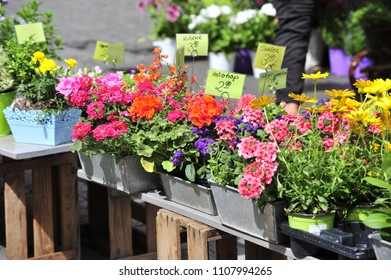 Flowers are for sale at a small stall in Rothenburg ob der Tauber, Germany.
