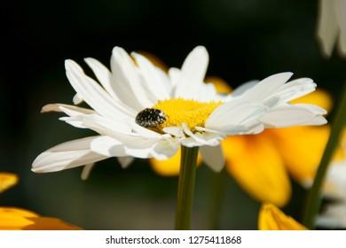 Flowers in sammer