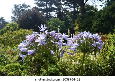 Flowers, San Francisco Botanical Garden