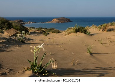 Flowers and sand dunes of Gomati in Lemnos
