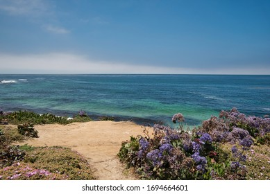 Flowers with sea view at the Californian coast
