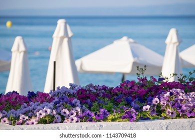 flowers and sea views