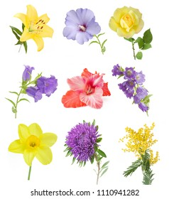 flowers set isolated on white background: lily, blue bells, rose, aster, mimosa, narcissus, gladioluses