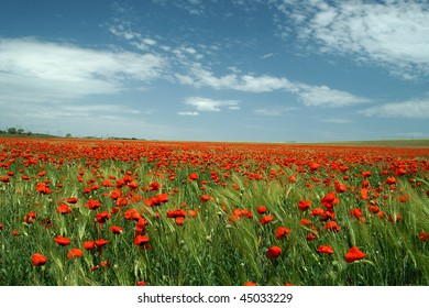 Flowers in the south of Ukraine