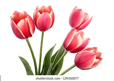 Flowers. Spring bouquet of pink tulips on a white background
