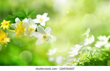 Flowers in spring on sunny green background with bright bokeh