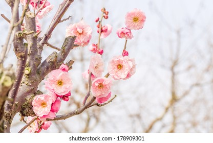 Royalty Free Earliest Spring Flowers Stock Images Photos Vectors