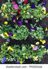 Flowers in springtime garden
