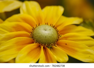 Flowers in springtime and summer (aster, asteraceae)