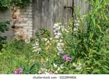 Flowers and stinging nettles in front of a gray wooden gate
