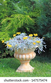 Flowers in a stone pot