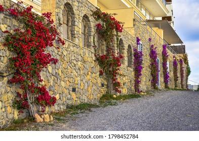 Flores y piedras en un hermoso sendero a pie desde Ibiza