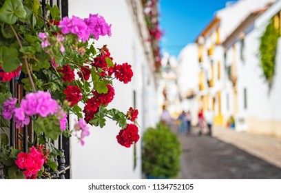 Flowers in the streets in the old town of Cordoba
