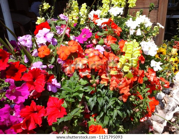 Flowers in strong colors