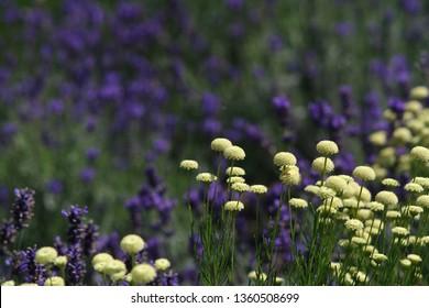 flowers in sumer garden