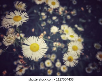 Flowers in the summer