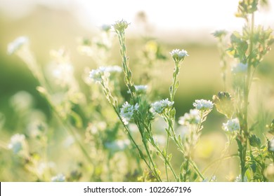 Flowers in summer. Outdoor nature view