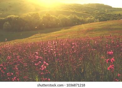 flowers in the sun, field of flowers