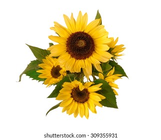 flowers sunflower on a white background