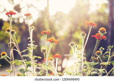 flowers and sunlight , nature background