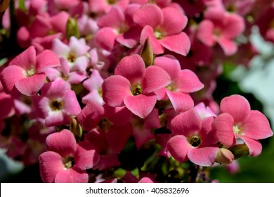 Flowers / This small flowers are a Kalanchoe Blossfeldiana and lasted for weeks after my daughter let to me to care. They were beautiful and the composition deserved a macro.