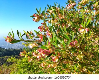 Flowers at the top of Margalla Hilss in summer