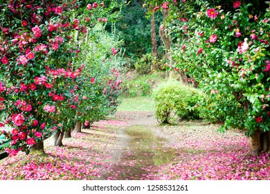 Flowers and trails and puddles