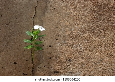 Flowers, trees, crevices in walls