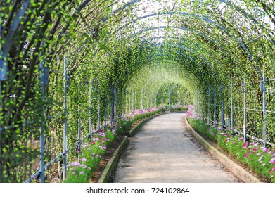 Flowers tunnel in garden