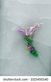 flowers under ice