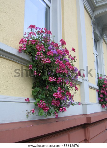 Flowers under the window on the wall.