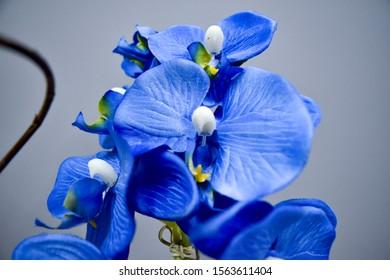 Flowers with unfocused corners plant