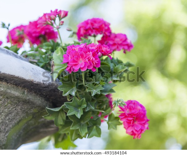 Flowers in the urban environment