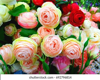 Flowers of various colors