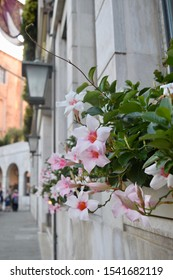 Flowers in Venice in the Summer 2019)