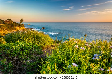 Flowers and view of the Pacific Ocean from cliffs in Corona del Mar, California.