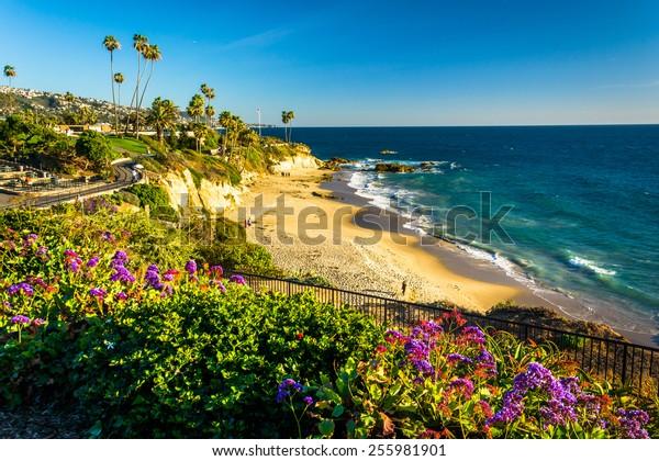 Flowers and view of the Pacific Ocean at Heisler Park, in Laguna Beach, California.