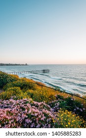Flowers and view of Scripps Pier at sunset, in La Jolla Shores, San Diego, California