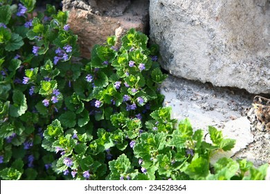 flowers at a wall